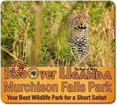 4-Day Private Luxury Big-5 Wildlife Safari