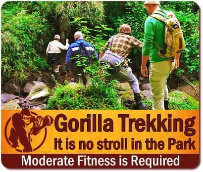 Am I fit enough for a Gorilla Trek