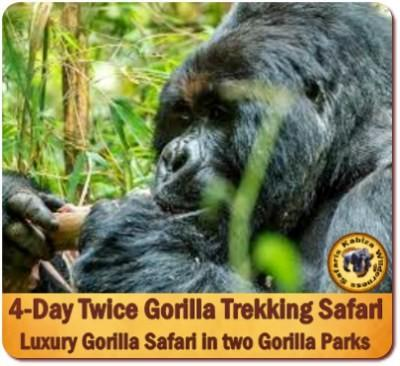 Fly-In Twice Gorilla Trekking Luxury Safari