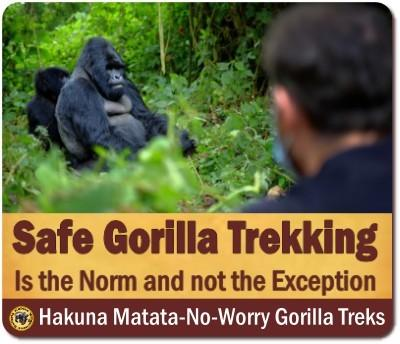 Is it safe to track Gorillas