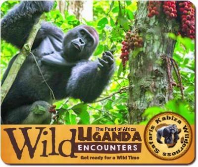 Experience Incredible Wild Encounters in Uganda-