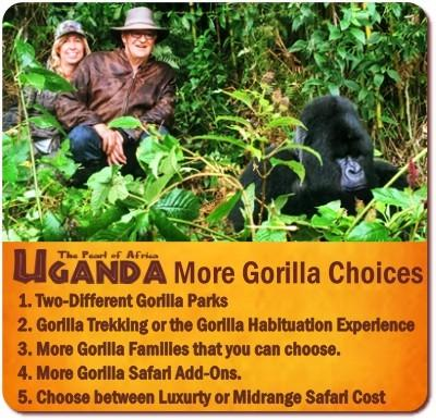 more Gorilla Trekking Choices and Options