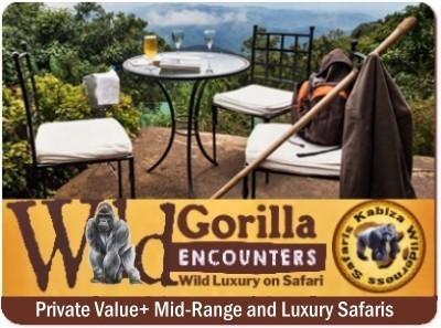 Choose your Gorilla Safari