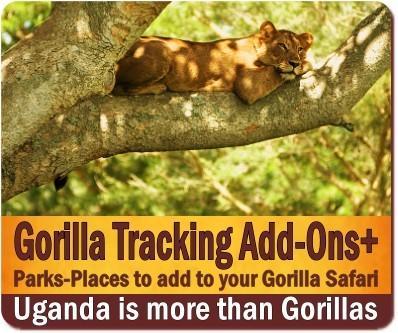 Gorilla Trekking Safari Add-ons