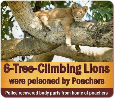 March 2021 Lion Massacre in Queen Elizabeth Park